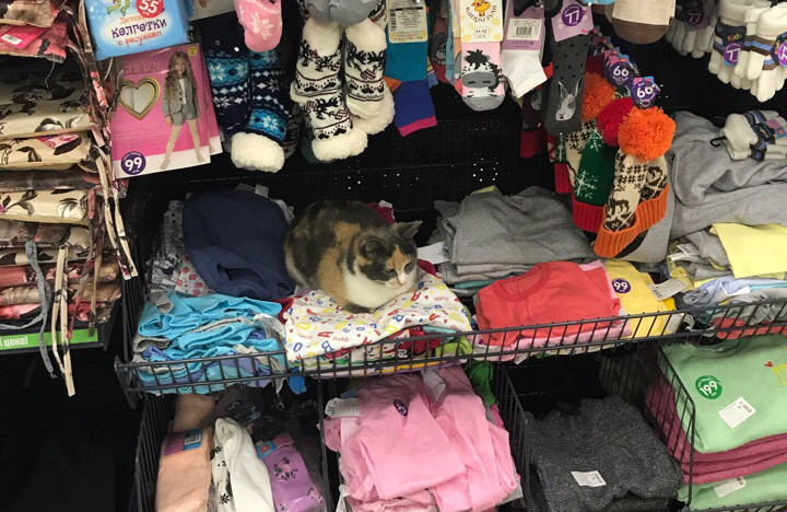 «Трехцветный – приносит удачу». В магазине в Смоленске вещи охраняет кот