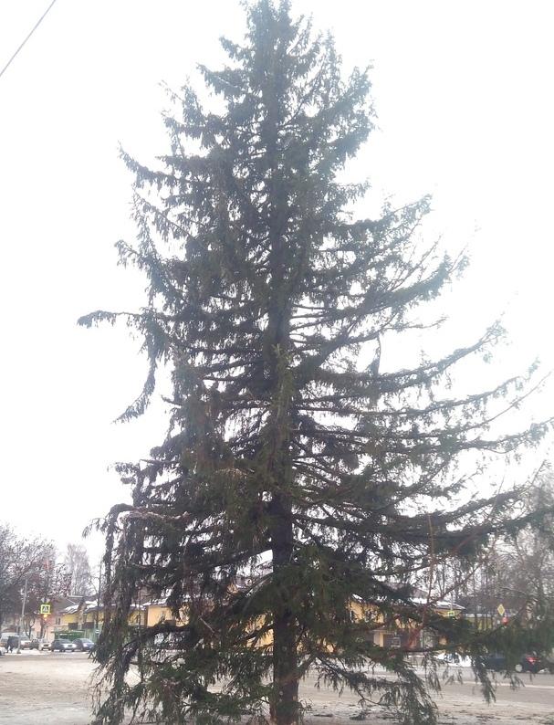 «Страх и ненависть в Сафонове». Жители Смоленской области иронизируют над новогодней елкой
