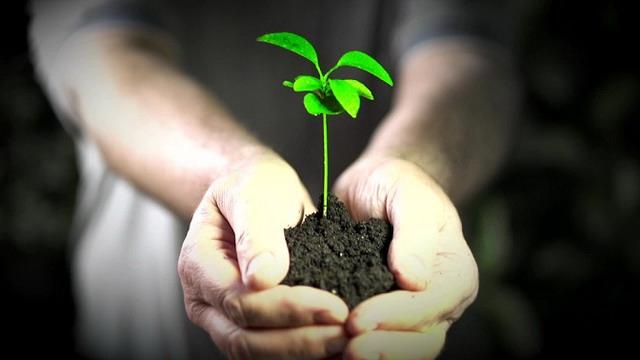 «Единая Россия» запустит экологические сервисы «Зеленая карта» и «Красная кнопка»