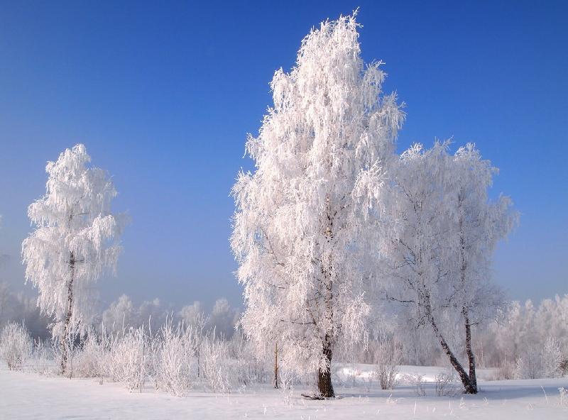 «Морозно и ветрено». Какая погода ждет смолян 25 января