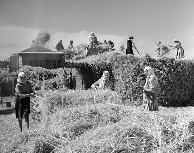 Чем обернулось строительство «коммунизма» в отдельно взятом смоленском колхозе