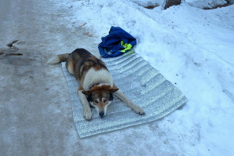 В Смоленской области спасли собаку, которую сбила машина
