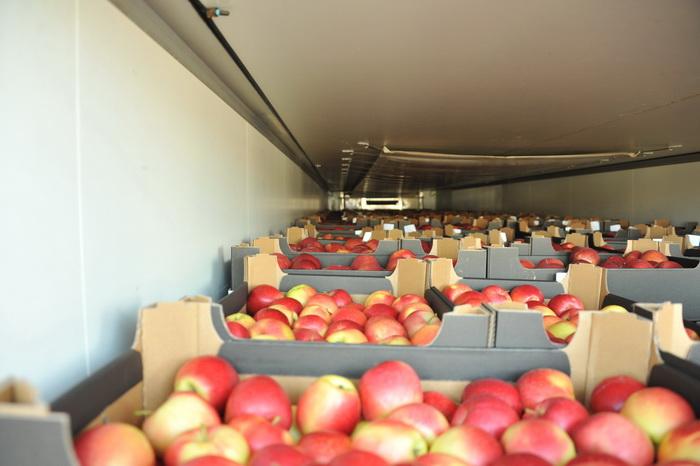 Смоленская таможня задержала 95 тонн овощей и фруктов из списка эмбарго