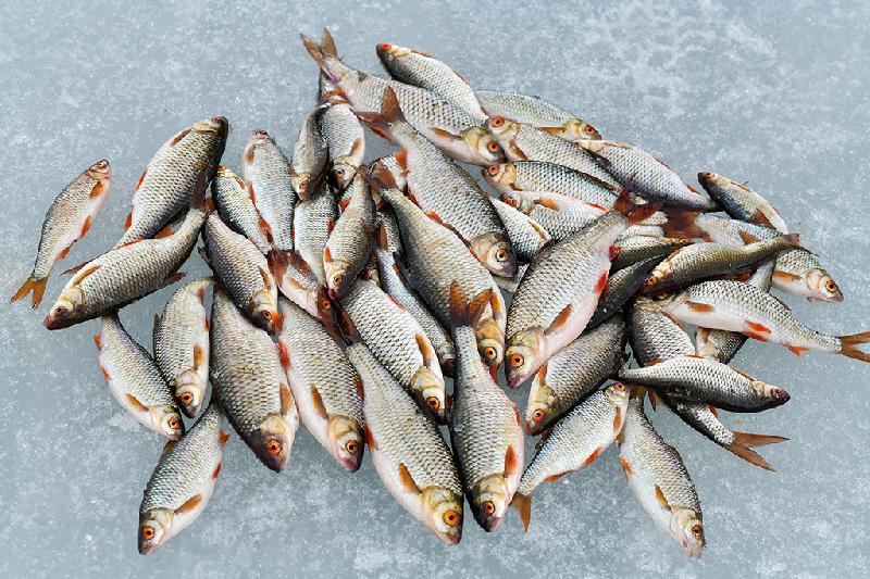 На смоленских водоемах стартовал долгожданный жор рыбы