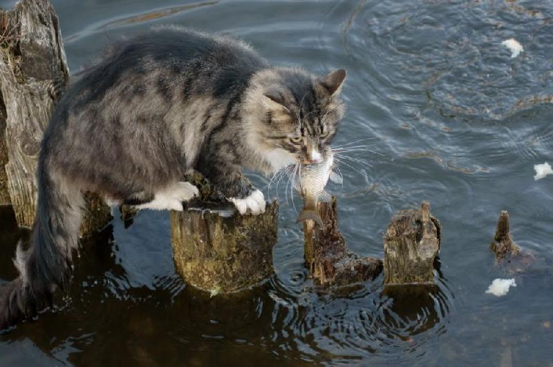 На каких смоленских водоемах с сегодняшнего дня ограничен вылов рыбы