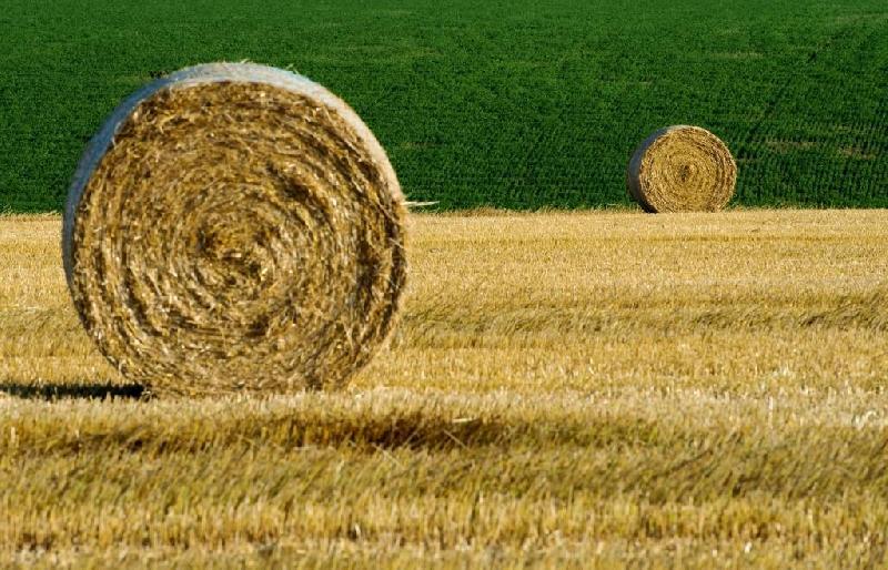 Смоленской области выделили деньги на развитие сельского хозяйства