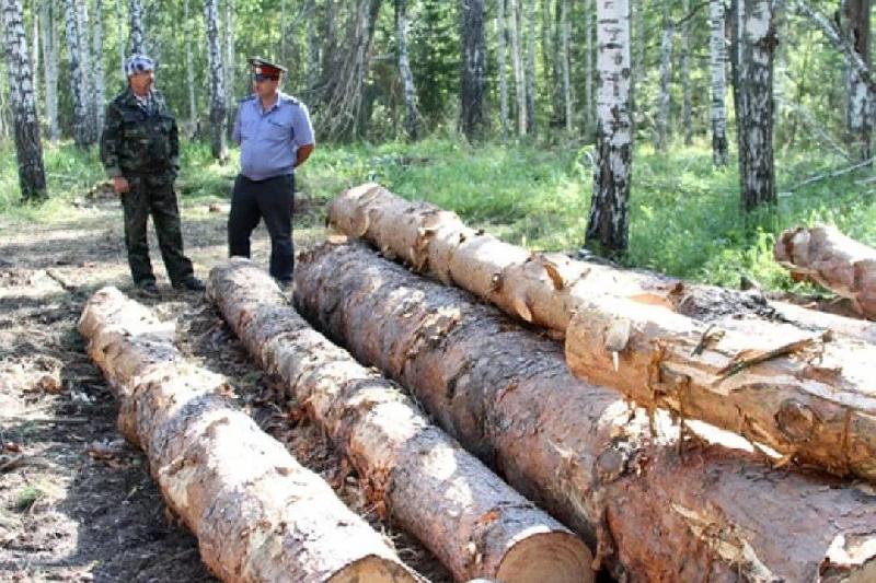 В Смоленской области обнаружили незаконную порубку