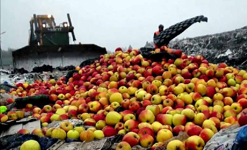 В Смоленской области уничтожили 50 тонн подозрительных фруктов