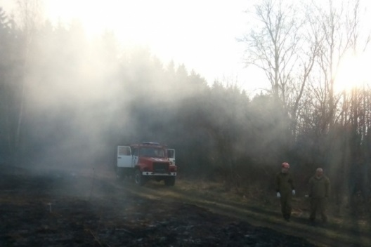 Лесные пожарные спасли от огня дачи смолян
