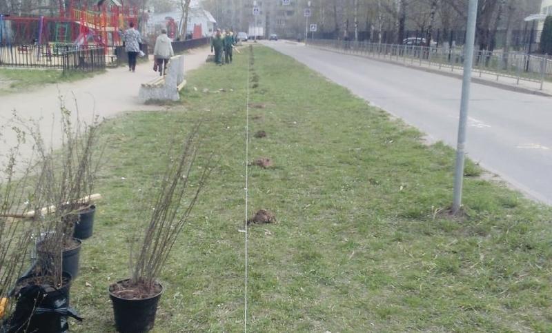 В Смоленске высадили живую изгородь