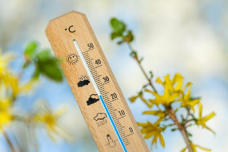 Ночные заморозки в Смоленской области прекратились