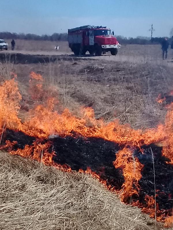 Смоленская область охвачена огнем: десятки палов в сутки