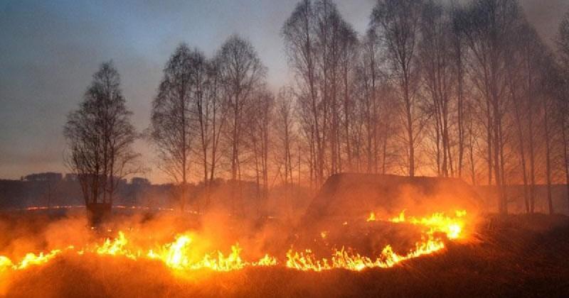 Сколько гектаров смоленской земли выжгли пожары