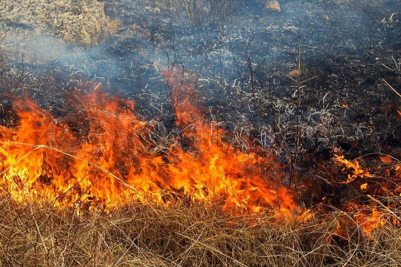Весенние пожары выжгли «полноценный город» в Смоленской области
