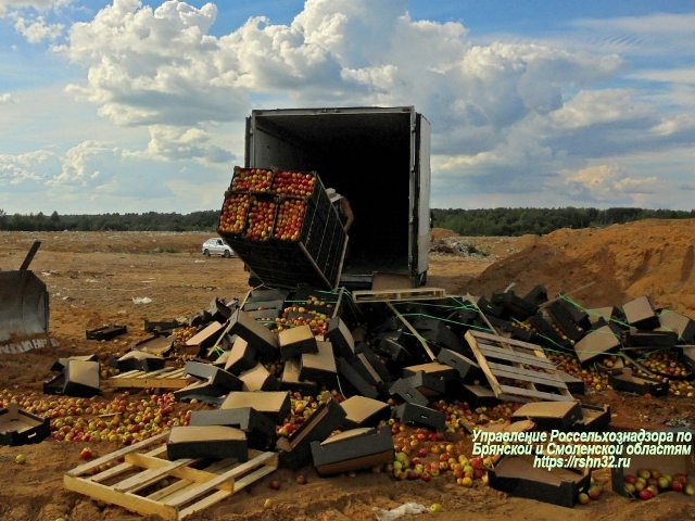 «Овощи, фрукты и говядина». Под Смоленском захоронили 18 тонн продуктов