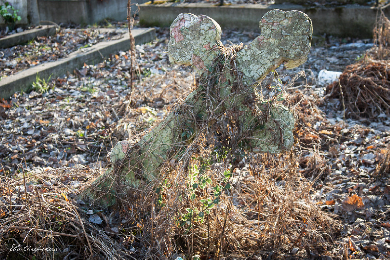 Нового кладбища в Смоленске не будет