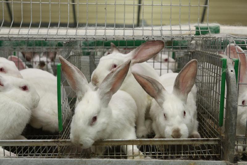 Алексей Островский подписал Соглашение о расширении кролиководческой фермы «КРОЛЪ и К»