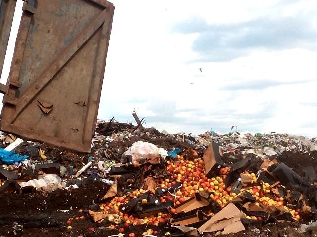 В Смоленской области уничтожено более 118 тонн продуктов