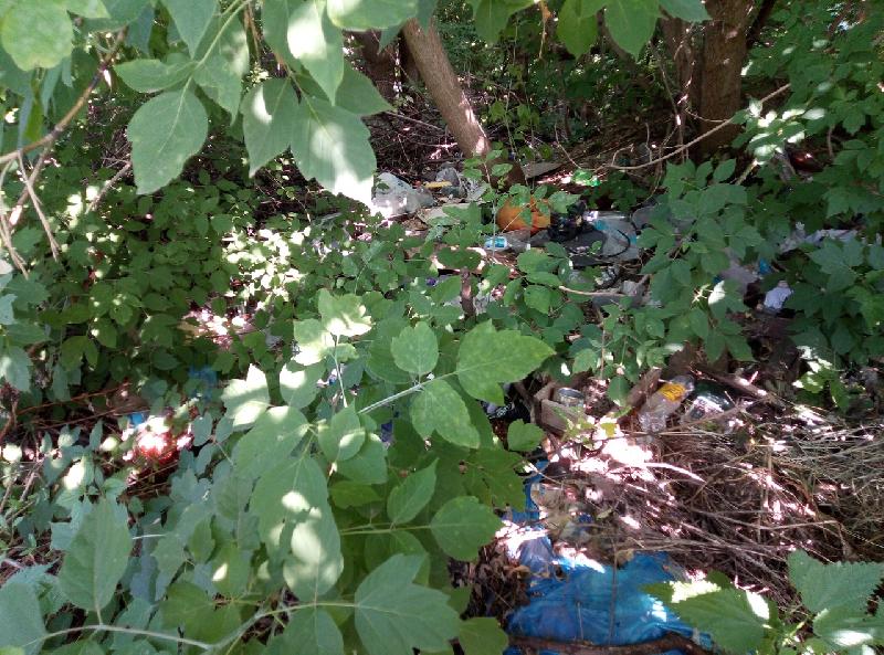 Чиновники Смоленска могут лишиться должностей из-за… мусора