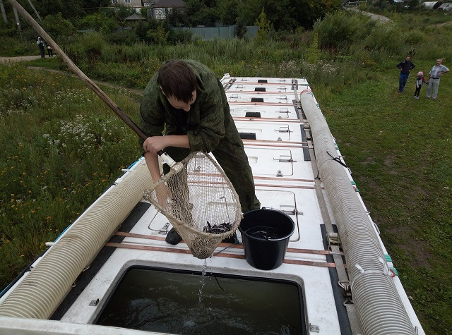 В Смоленске в Днепр выпустили 9500 мальков стерляди: как это было