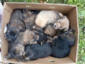 В Смоленске из-под развалин дома достали 10 щенков
