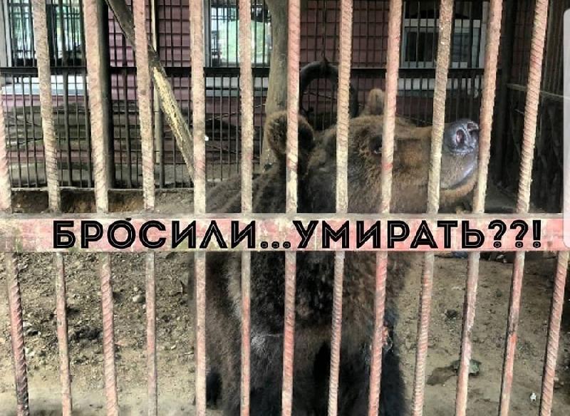Правда об «истощенном» медведе в кафе под Смоленском