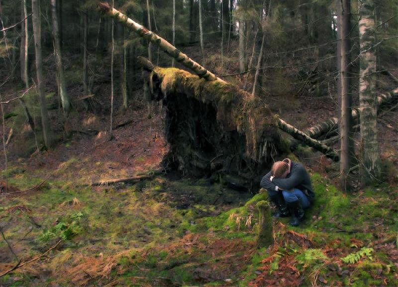 В лесу под Духовщиной пропал 58-летний смолянин