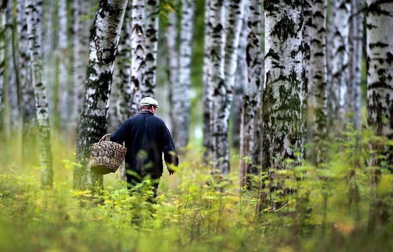 В лесу под Смоленском заблудился 55-летний грибник