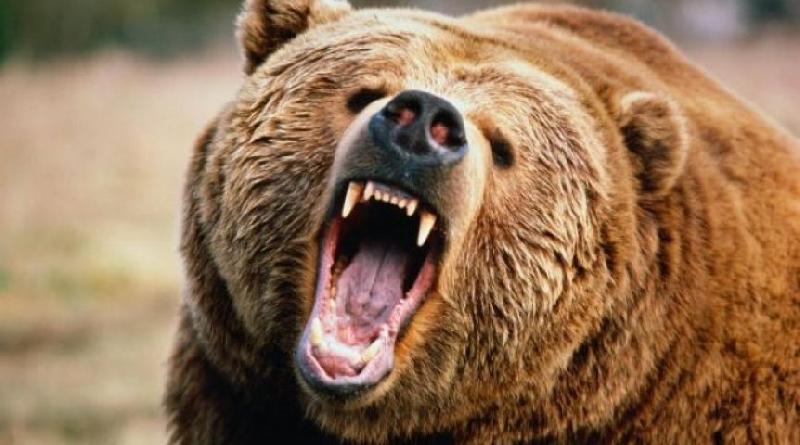 Раненный медведем смолянин рассказал о схватке со зверем