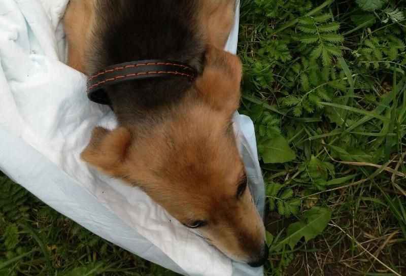 Соцсети: В Смоленске щенка скинули с третьего этажа