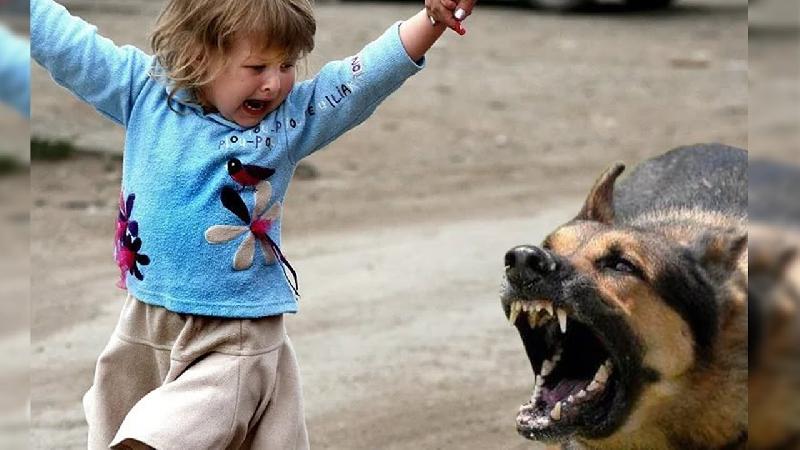 Сотрудники СУ СКР проверят сообщения о нападениях собак на жителей Смоленска