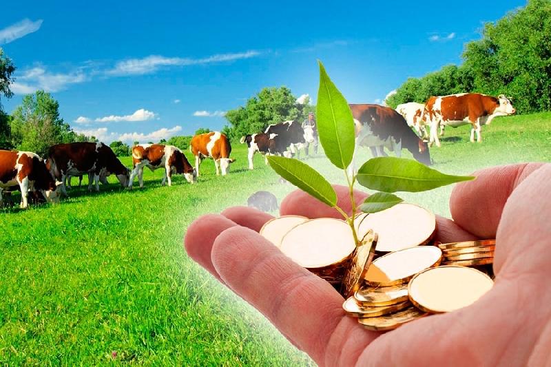 Смоленские фермеры могут получить грант за стартап
