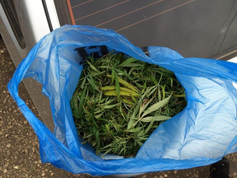 «Пришли по наводке». В Смоленской области повязали любителя марихуаны