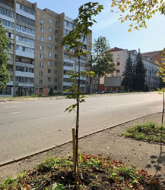 В Смоленске второй раз за год озеленили ул. Тенишевой