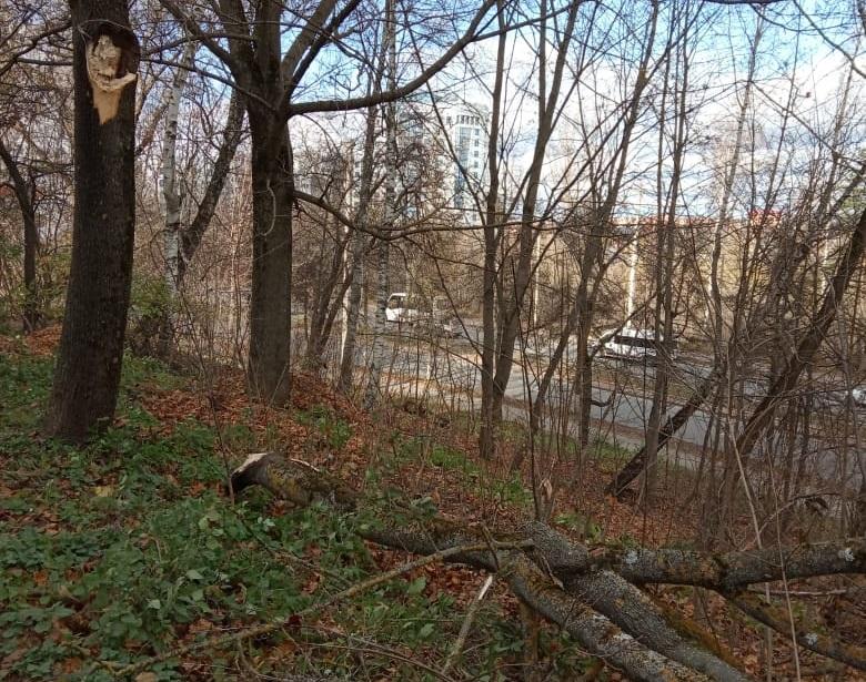 В Смоленске сильный ветер повалил несколько деревьев