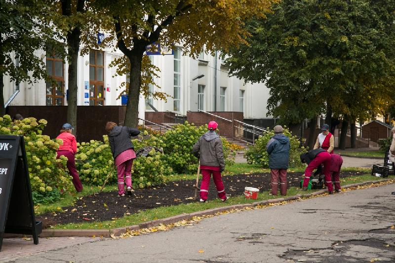 Весной в Смоленске расцветут голландские тюльпаны