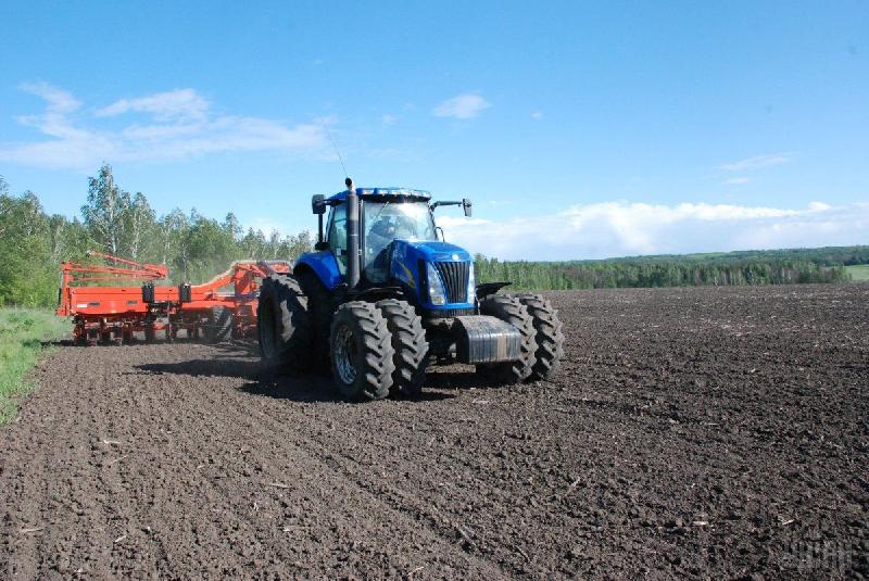 В Смоленской области планируют посеять озимых на почти на четверть больше прошлогоднего