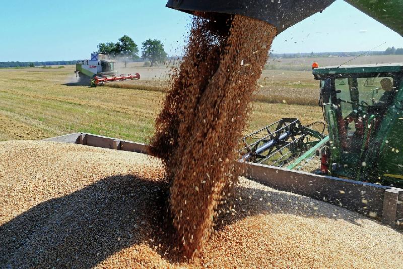 В Смоленской области – рекордный урожай зерновых и зернобобовых культур