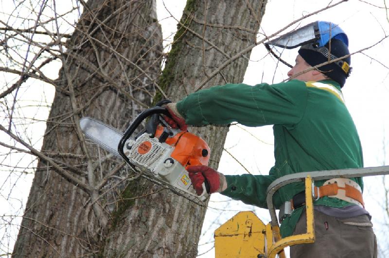 В Смоленске стартуют работы по формовочной обрезке деревьев