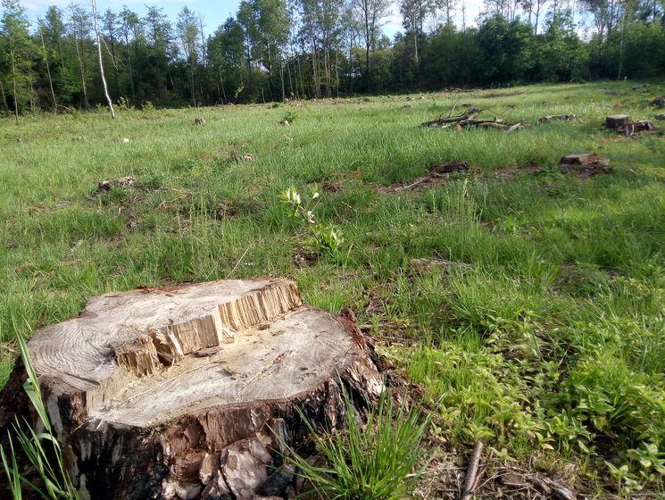 В Смоленской области черные лесорубы «нарубили» 2.3 млн рублей