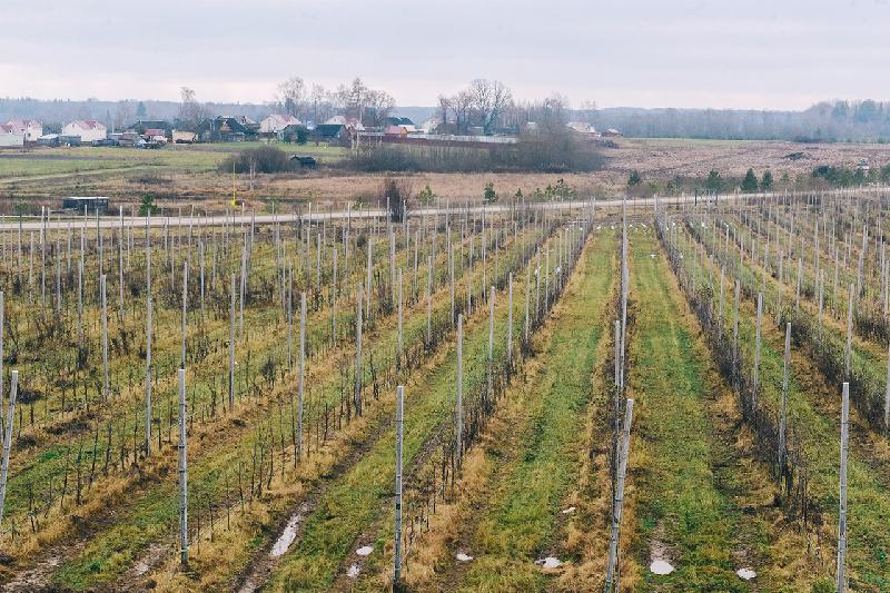 В Смоленской области реализуют масштабный «яблочный» инвестпроект