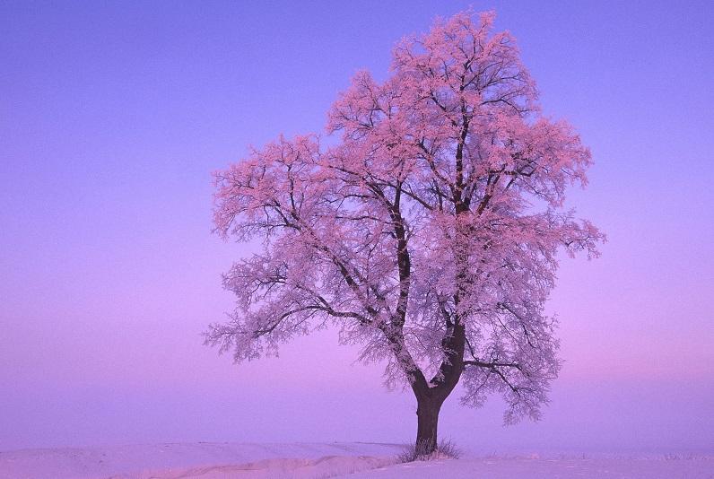 Смолян ждет самая обычная «розовая» зима