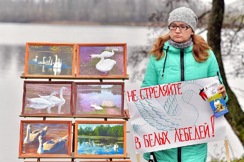 Русское географическое общество поддержало смоленских защитников лебедей
