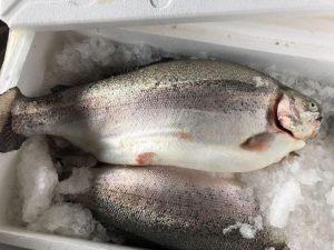 Через Смоленскую область не пропустили 2 тонны норвежской форели «для родственников»