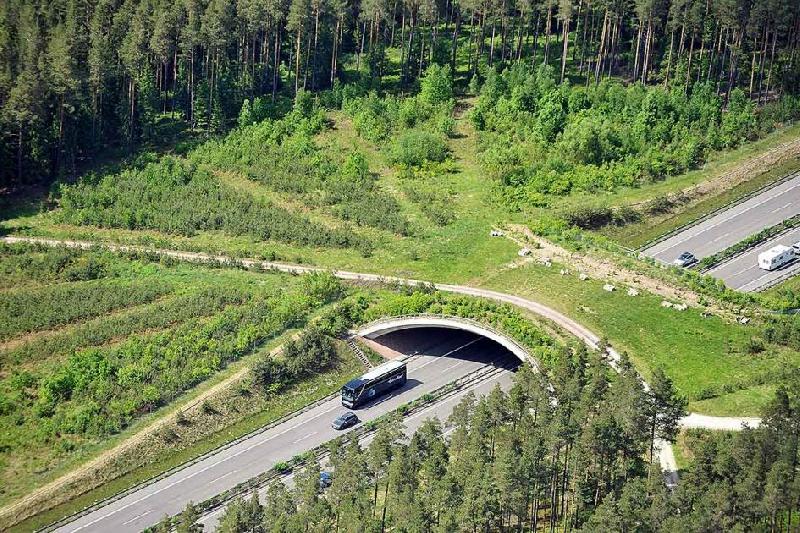 В Смоленской области на М-1 построят экодук
