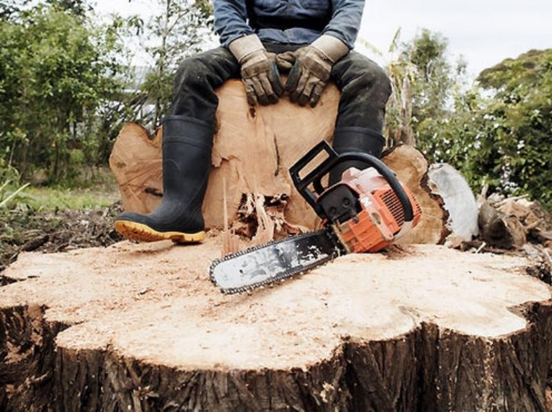 В Смоленской области черный лесоруб «нарвался» на штраф с конфискацией