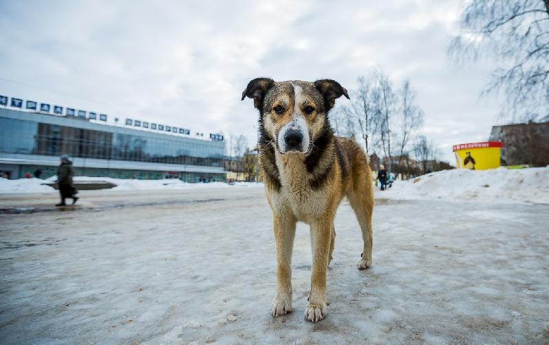 В Смоленске выбирают место для памятника Полкану