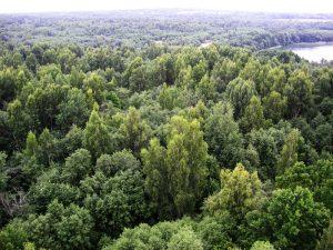 Смоленская область получила поощрение от государства за успехи в лесном хозяйстве
