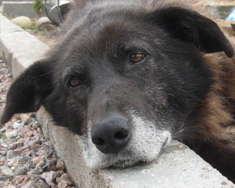 В Смоленской области проводят акцию помощи бездомным собакам