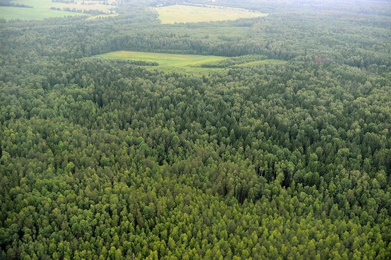В Смоленской области собрана рекордная сумма платежей от использования лесов и объектов животного мира